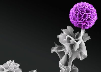 Scientists grow organic semiconductor crystals vertically for first time