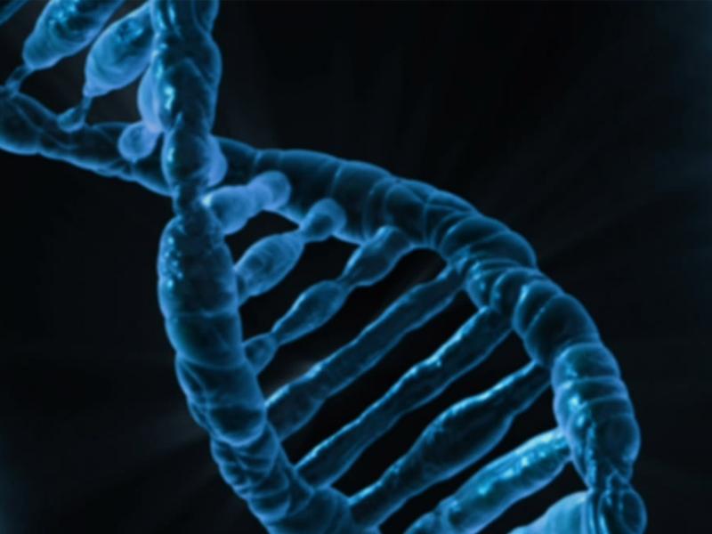 November 21, 2017 | Revolutionary imaging technique uses CRISPR to map DNA mutations