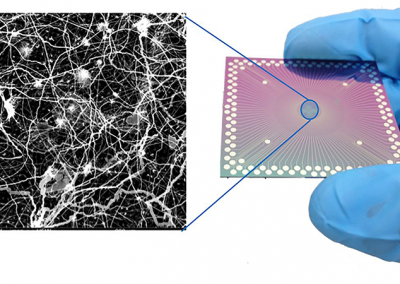 December 16, 2019 | Researchers observe brain-like behavior in nanoscale device