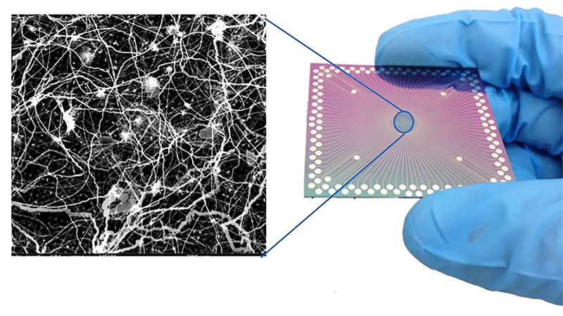 A device like the one in the study (right), and an electron microscope image showing the device's neuron-like arrangement of nanowires.