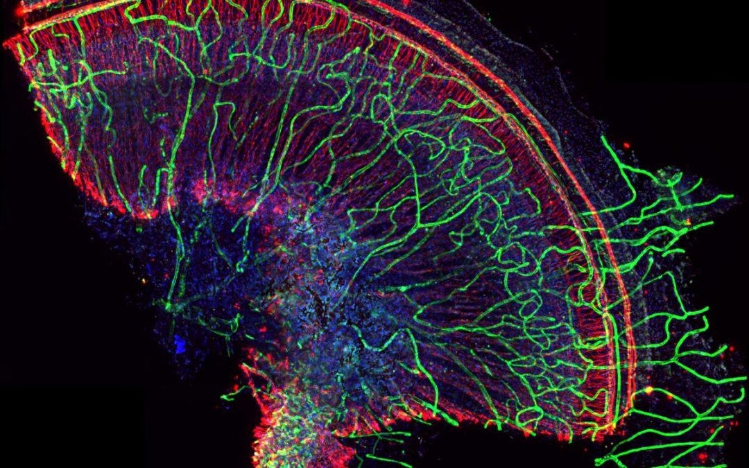 2019 UCLA microscopy image and video contest winners selected