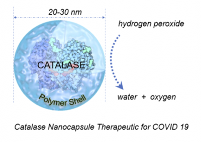 September 28, 2020 | Common Antioxidant Enzyme May Provide Potential Treatment for COVID-19