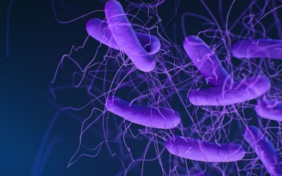 January 7, 2020 | Study reveals new details about how bacterial toxins cause life-threatening colitis