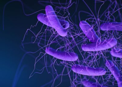 January 7, 2021 | Study reveals new details about how bacterial toxins cause life-threatening colitis