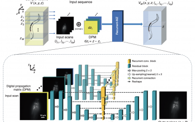 March 24, 2021   3D fluorescence microscopy gets a boost using recurrent neural networks
