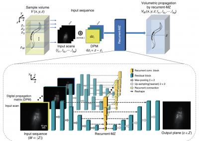 March 24, 2021 | 3D fluorescence microscopy gets a boost using recurrent neural networks